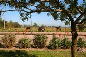 Friesch Paarden Centrum - for sale 21
